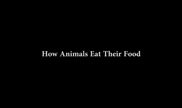 analysis video how animals eat their food